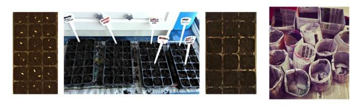 C37. Planting Seeds