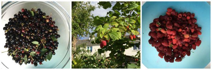 C1 Berries 2